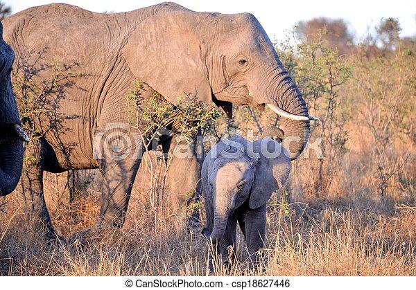 象, きば, 群れ - csp18627446