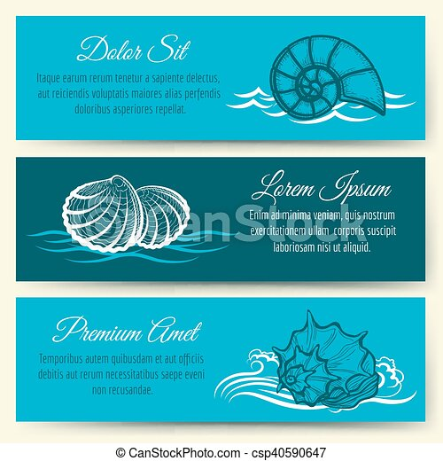 貝殻, フレーム, 旗 - csp40590647