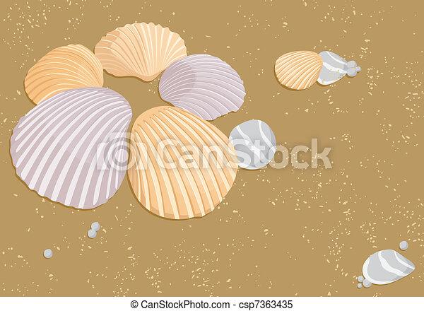 貝殻, ベクトル - csp7363435