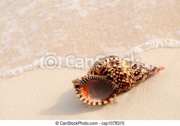 貝殻, 海洋 波 - csp1078315