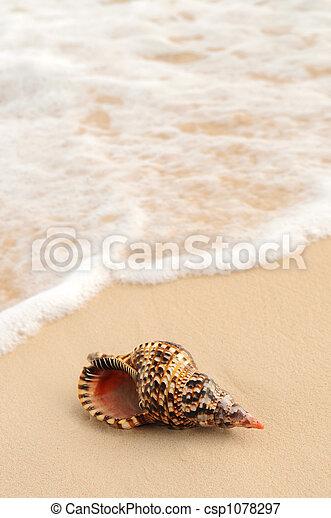 貝殻, 海洋 波 - csp1078297