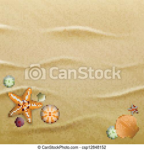 貝殻, 砂, 背景 - csp12848152