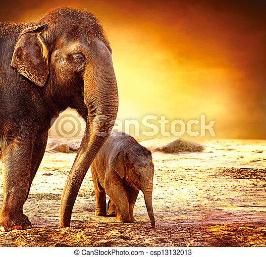 赤ん坊, 母, 屋外で, 象 - csp13132013