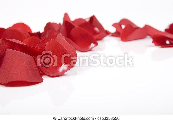赤, 花弁, バラ - csp3353550