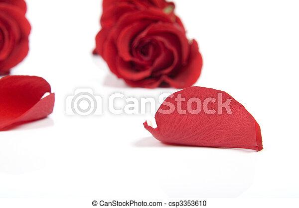 赤, 花弁, バラ - csp3353610