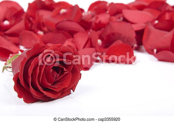 赤, 花弁, バラ - csp3355920