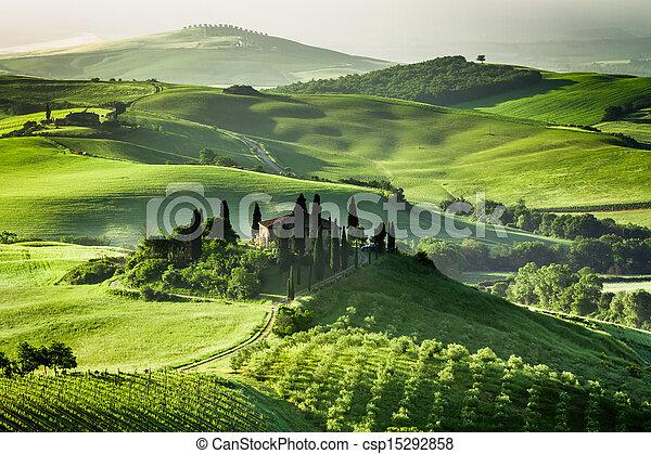 農場, 橄欖, 葡萄園, 小樹林 - csp15292858