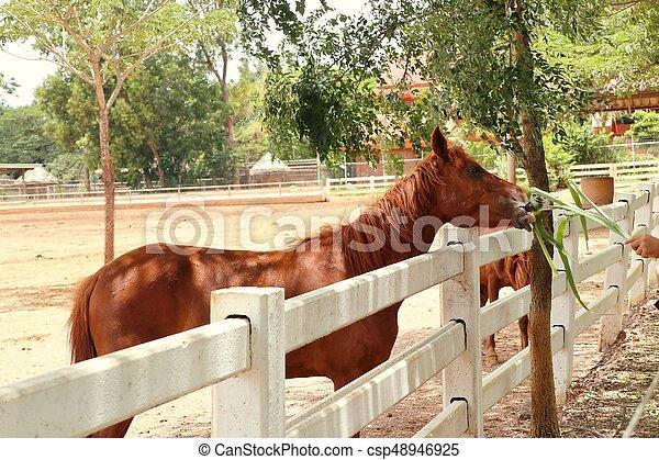 農場, 馬 - csp48946925