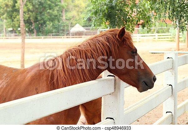 農場, 馬 - csp48946933