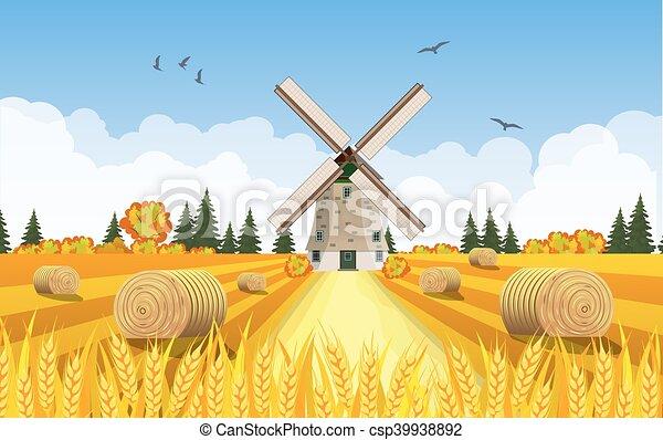 農村, 乾草堆, fields., 風景 - csp39938892
