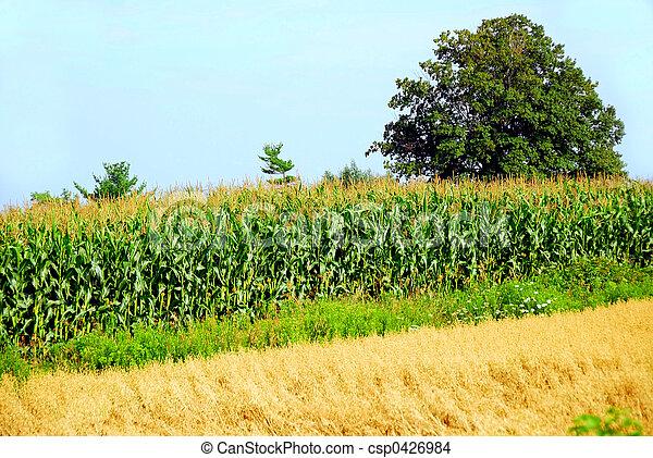 農業 - csp0426984