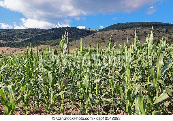 農業 - csp10542093
