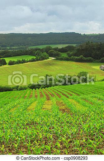 農業, 風景 - csp0908293