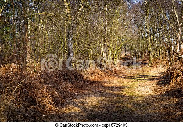 道, 森, によって, ハイキング - csp18729495