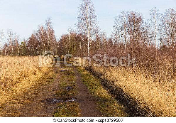道, 泥だらけである, 森, によって, heath - csp18729500