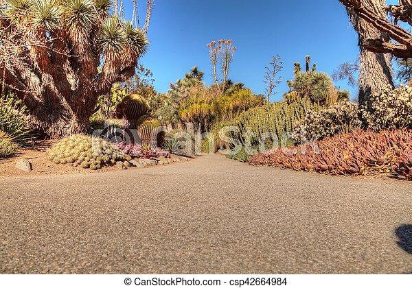 道, 砂漠, 庭 - csp42664984