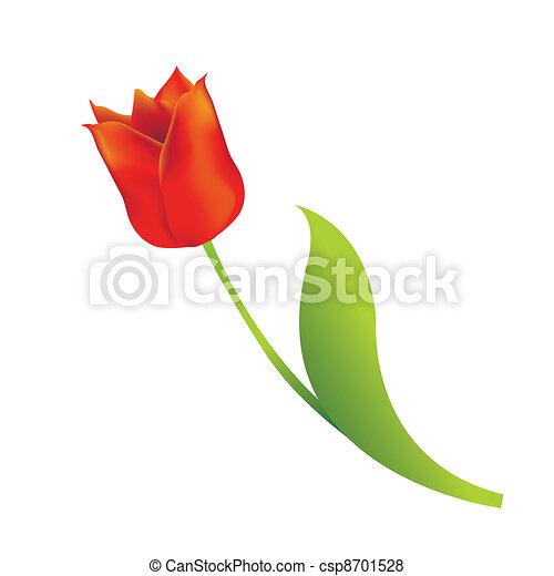 郁金香, 白色紅, 背景 - csp8701528