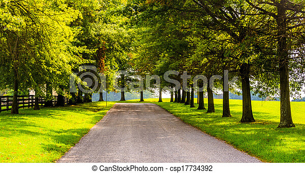 郡, 木, pennsylvania., ヨーク, 田園, 前方へ, backroad - csp17734392