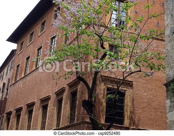 都市 通り, 絵のよう, 中心, -, 歴史的, siena - csp9252480