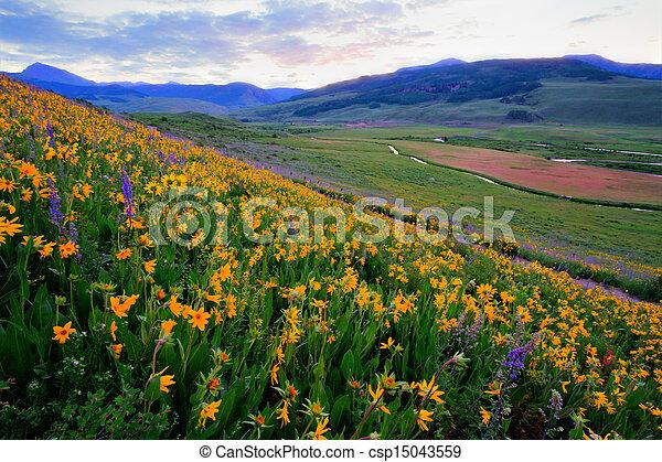 野生の花 - csp15043559