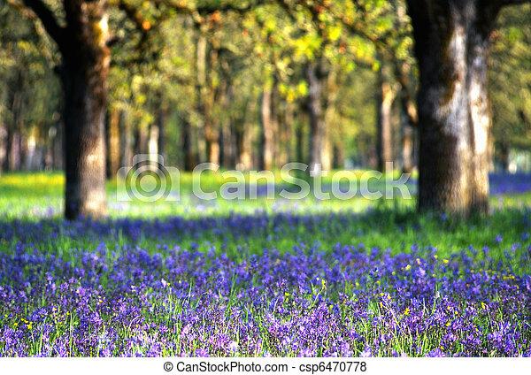 野生の花, 牧草地 - csp6470778