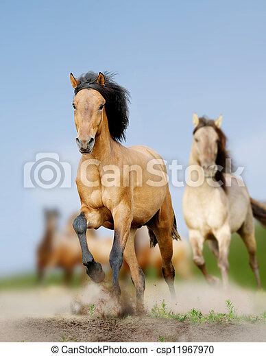 野生の 馬 - csp11967970