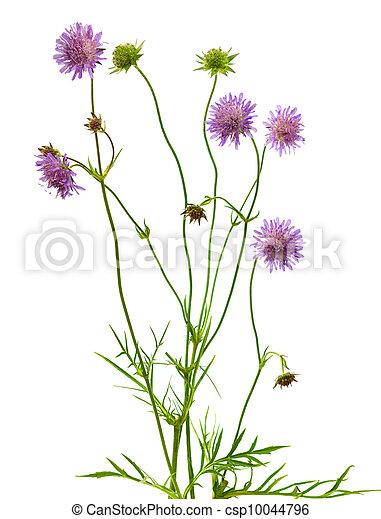 針差し, 植物, 花, 隔離された - csp10044796