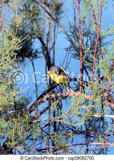 釣魚, 湖, 鳥 - csp39082700