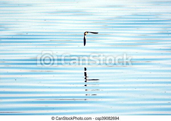 釣魚, 湖, 鳥 - csp39082694