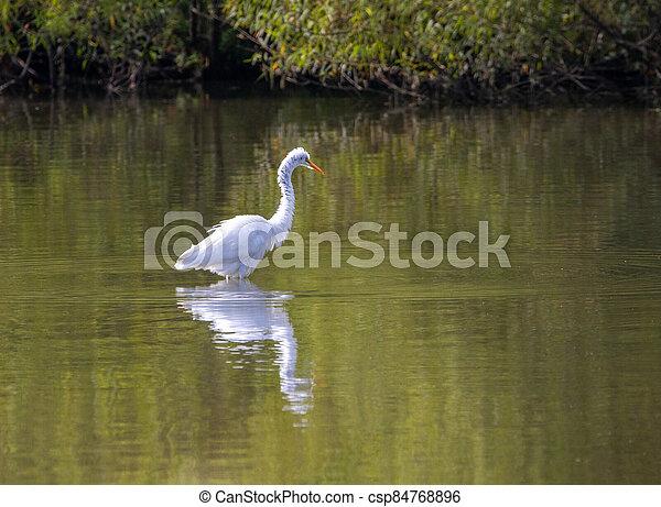 釣魚, 白鷺, 湖 - csp84768896
