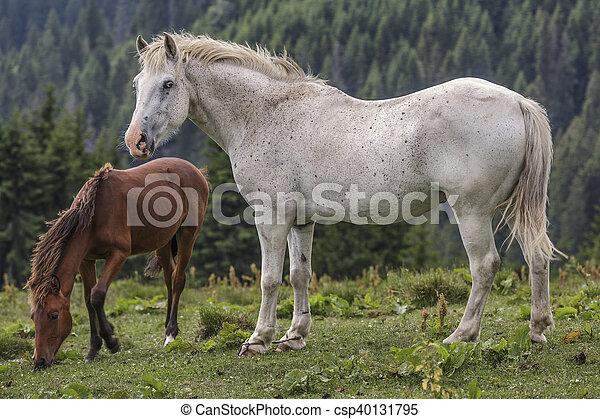 雌馬, 子馬, あし毛の馬, 白, 彼女. クリ, 雌馬, 彼女, romania., 子馬 ...