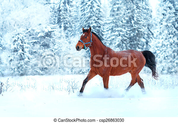 雪, 動くこと, 馬, 湾 - csp26863030