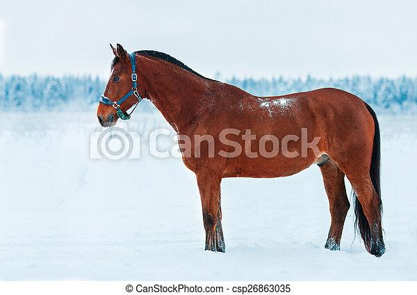 雪, 地位, 馬, 湾 - csp26863035