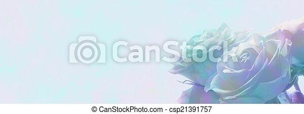 霧が深い, ばら, 旗, ロマンチック, 網 - csp21391757