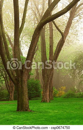 霧が濃い, 公園 - csp0674750