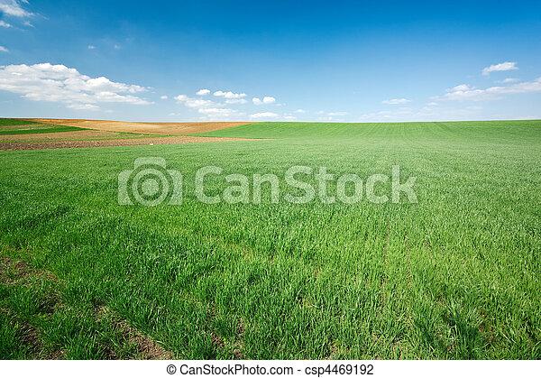 青い空, 小麦, 緑のフィールド - csp4469192