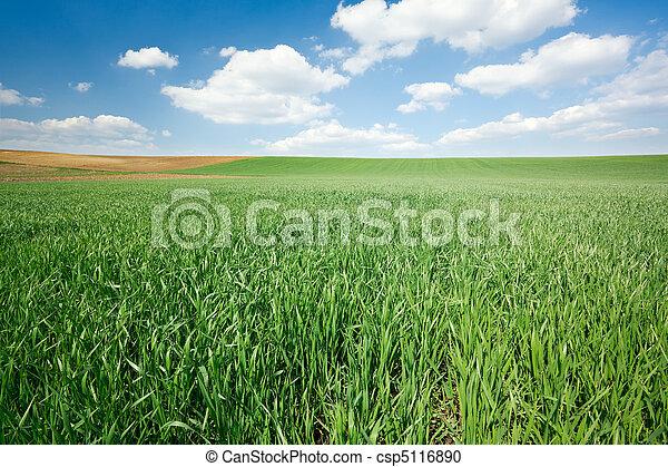 青い空, 小麦, 緑のフィールド - csp5116890