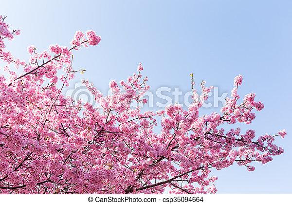 青い空, 木, sakura - csp35094664