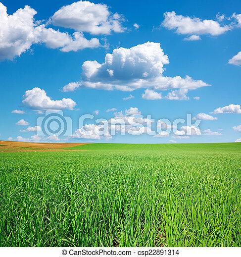 青い空, 緑のフィールド, 小麦, 積乱雲 - csp22891314