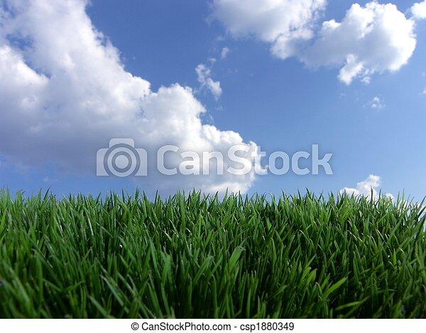 青い空, 草, 緑 - csp1880349