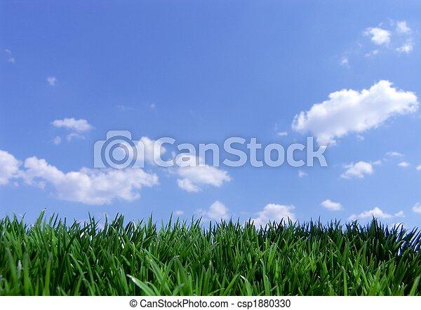 青い空, 草, 緑 - csp1880330