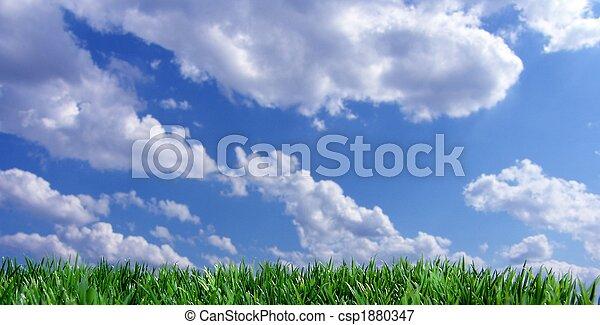 青い空, 草, 緑 - csp1880347