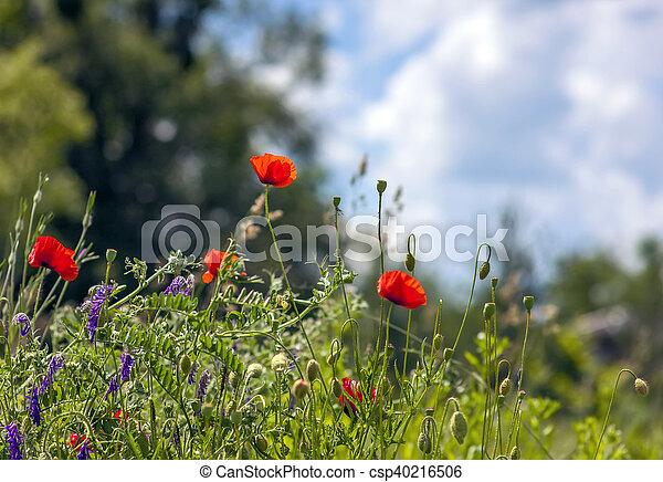 青い花, 空, ぼんやりさせられた, 緑の背景, ケシ, 草, 赤 - csp40216506
