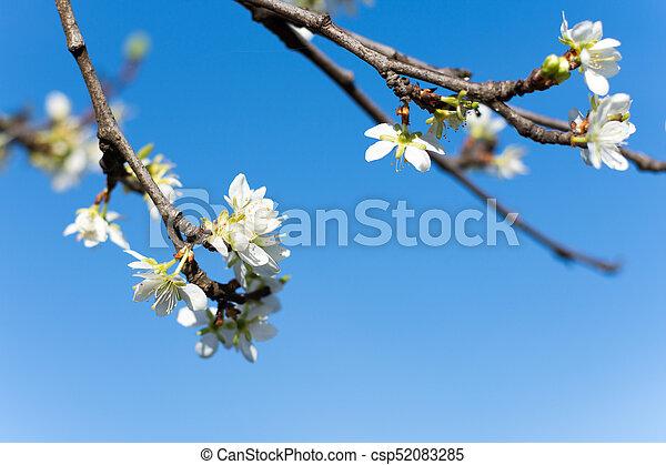 青い花, 空, 背景, 木 - csp52083285