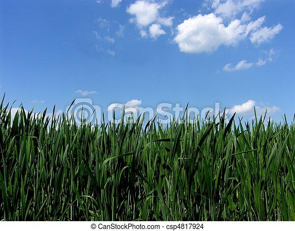 青緑, gras, 空, 新たに - csp4817924
