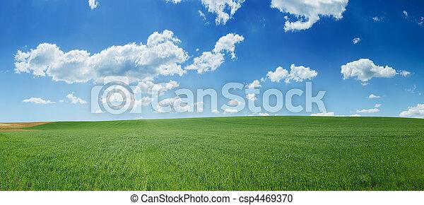 青, 小麦, パノラマ, 空フィールド, 緑 - csp4469370