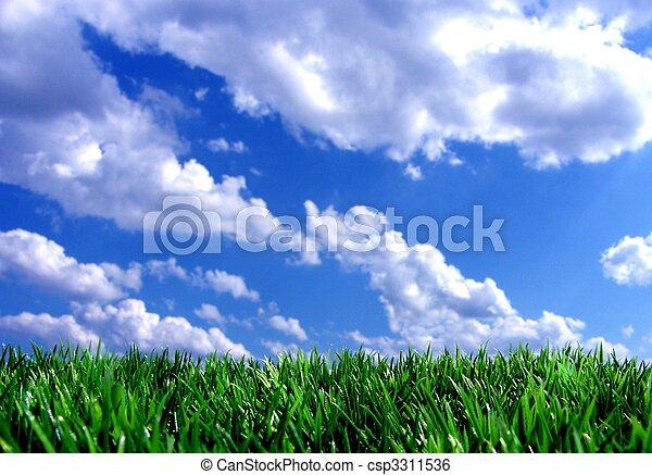 青, 新たに, 空, 緑, gras - csp3311536