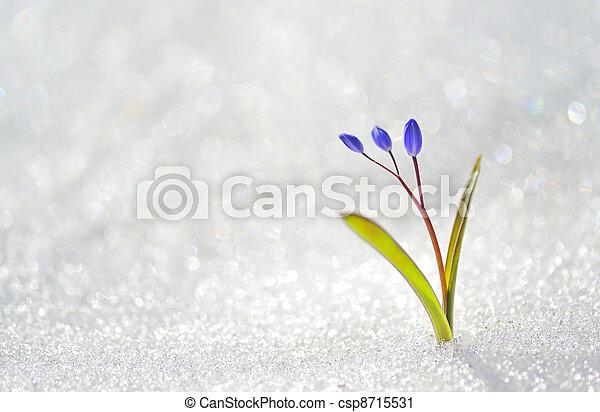 青, 春の花 - csp8715531