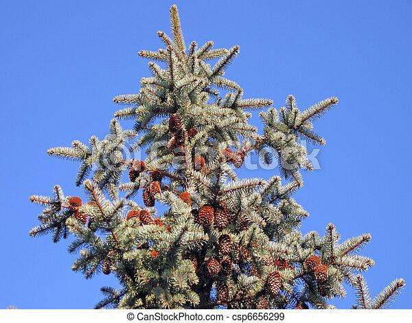 青, 木, 緑, 日当たりが良い, 空 - csp6656299