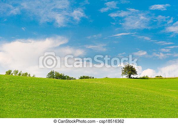 青, 牧草地, 空, 木, 緑, 曇り, 地平線 - csp18516362
